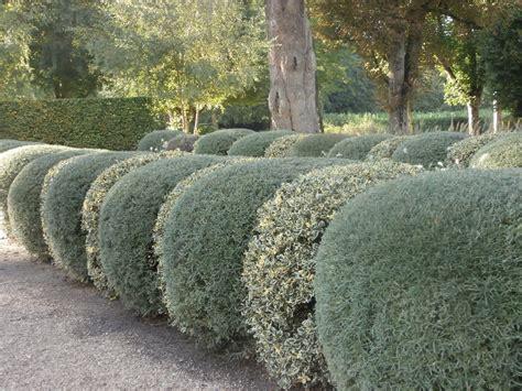 METIDO EN JARDINES: Elementos del Jardín: Cerramientos