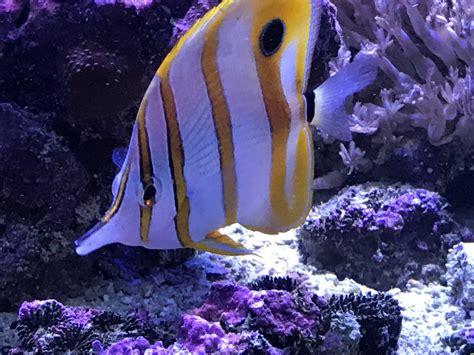 Método acuario  solo peces . :: Acuario MARINO