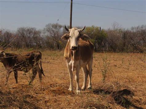 México busca ganadería sustentable para evitar degradación ...