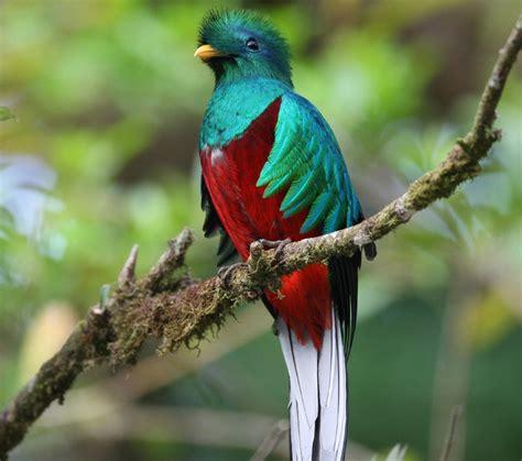 Mexico: El Quetzal ave sagrada de los Aztecas y Mayas en ...