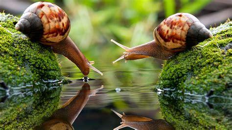 Mi Blog De Biologia: Los Moluscos.