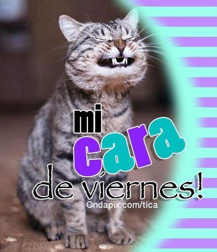 Mi cara de #viernes #gatos #tarjetitas #humor | Imágenes ...
