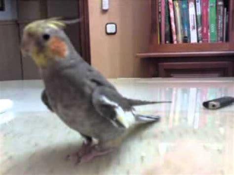 Mi ninfa  carolina  Punki cantando   YouTube