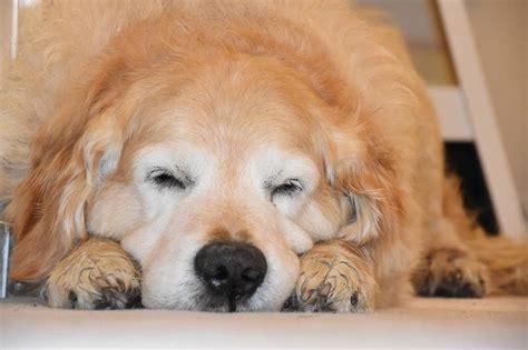 Mi Perro Tiene Muchos Gases y se tira Muchos Pedos ...