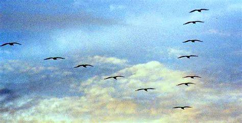 Mi Rinconcito de los Sueños: El vuelo de las aves
