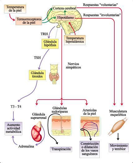 Microcosmos: Los organismos y su ambiente