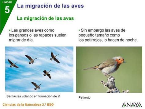 Migración de aves: definición e importancia para el medio ...