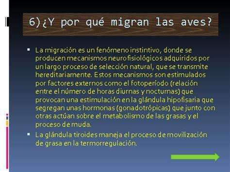 Migración de las golondrinas   Monografias.com
