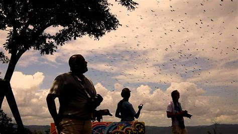 Migración masiva de aves rapaces   YouTube