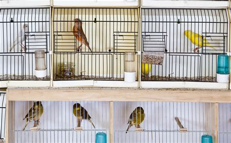 Miguel del Pino   ¿Animales en las tiendas?   Libertad Digital