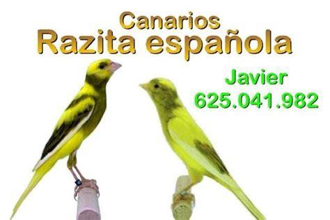 MIL ANUNCIOS.COM   Canarios