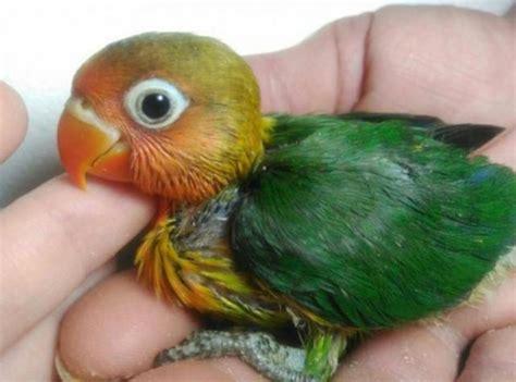 MIL ANUNCIOS.COM   Compro aves y pájaros