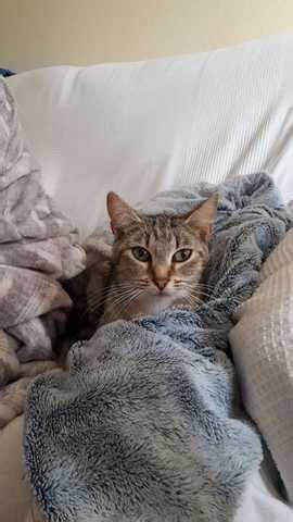 MIL ANUNCIOS.COM   Curvi gata adopciÓn valencia