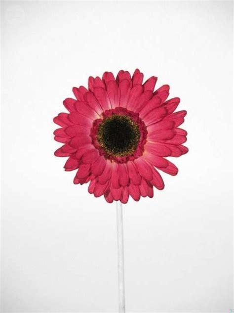 MIL ANUNCIOS.COM   Mis anuncios | Flores artificiales ...