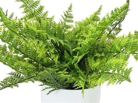 MIL ANUNCIOS.COM   Mis anuncios | Plantas verdes, Plantas ...