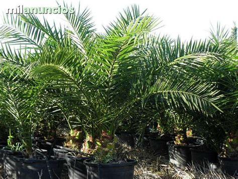 MIL ANUNCIOS.COM   Venta de plantas online.