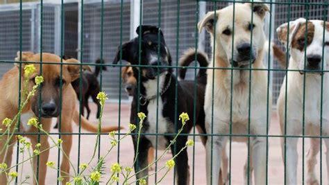 Miles de firmas contra el cierre de la perrera de Mataró