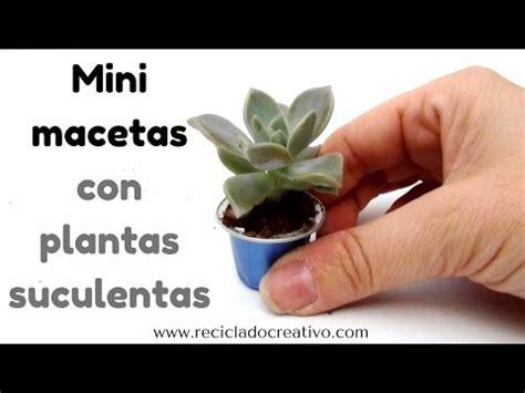 Mini macetas de plantas suculentas en cápsulas de café ...