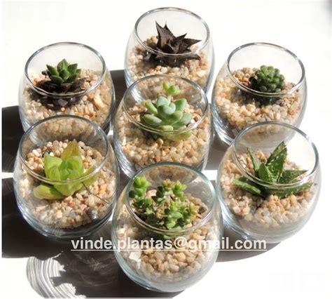 Mini terrarios de cristal, cactus miniatura, plantas ...