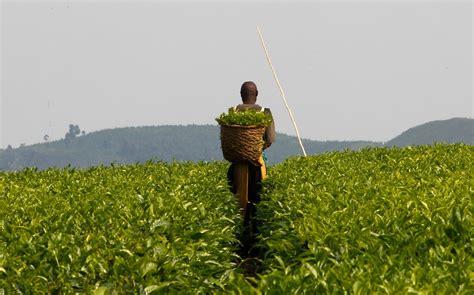Ministério da Agricultura chama empresários para estimular ...