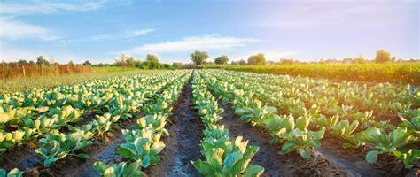 Ministério da Agricultura refuta afirmações da CAP sobre ...