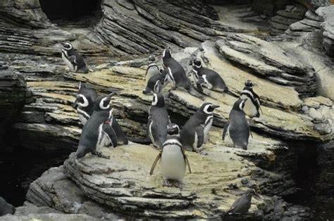 miosotis: CURIOSIDADES DO OCEANÁRIO DE LISBOA