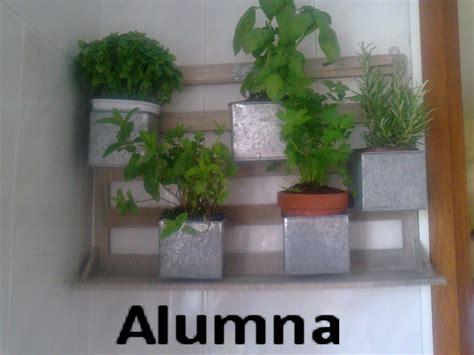 mis plantas aromáticas en la cocina ~ Mi bitácora