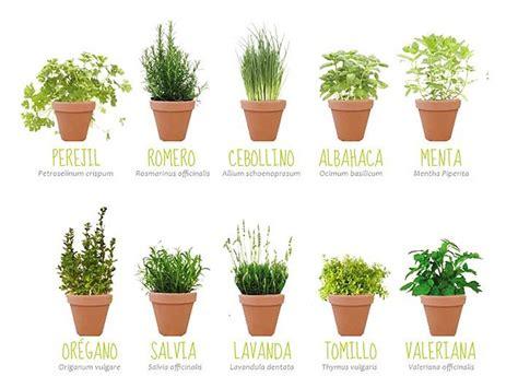 Mis propósitos de decoración 2015 | Plantas aromaticas y ...