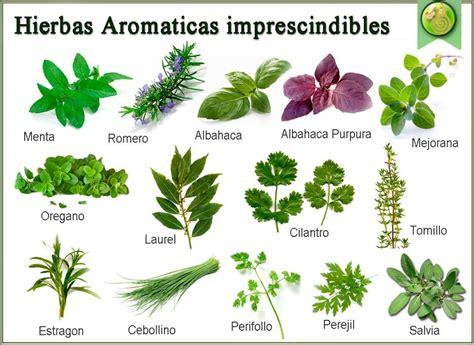 Mis Recetas Anticáncer: Hierbas aromáticas para generar ...