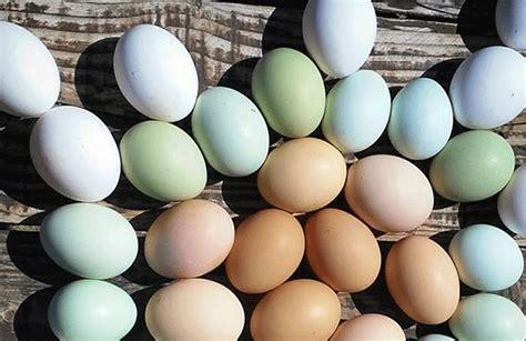 Misterio resuelto: descubrieron por qué los huevos tienen ...