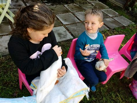 Mobile petting zoo | Durbanville | Gumtree Classifieds ...