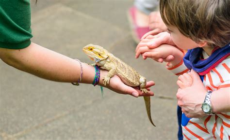 Mobile Petting Zoo in Los Angeles | Critter Squad Wildlife ...