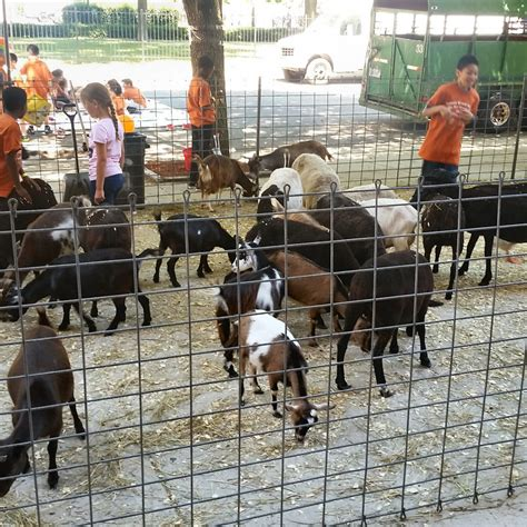 Mobile Petting Zoo Rentals | Clowning Around & Celebration ...
