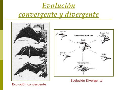 Modelos de especiación