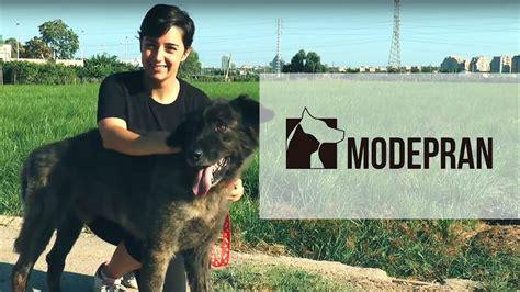 Modepran Valencia campaña de voluntarios   YouTube