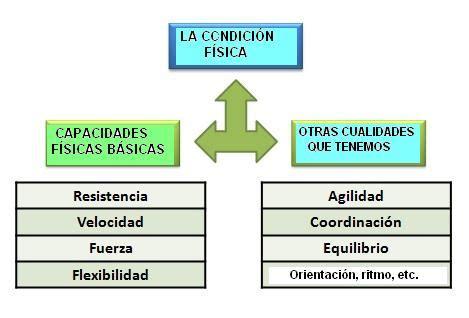 Módulo de Educación Física 2012: LAS CAPACIDADES FÍSICAS