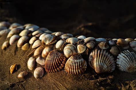 Moluscos   Wiki Reino Animalia