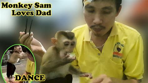 MONKEY DANCE Hiphop Baby Monkey Loves Dad And Family Meals ...