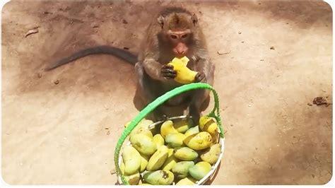 Monkey Loves Mango | Don t Be Selfish   YouTube