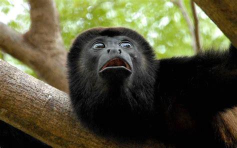 Mono negro   1440x900 :: Fondos de pantalla y wallpapers