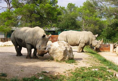Montpellier zoo  lunaret , Zoo   animal park   Montpellier ...