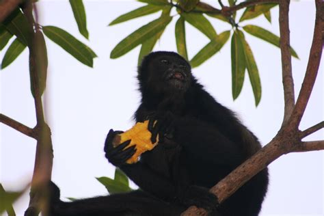 More Monkeys | SUGAR BEACH.com