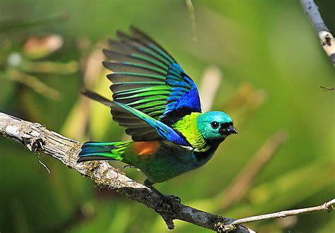 "More on ""rainbow birds"" | Julian O Dea"