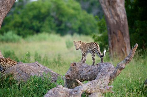 Moremi Game Reserve, Botswana, Africa | Moses spotted this ...