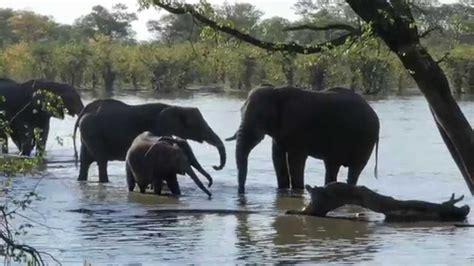 Moremi Game Reserve, Botswana, Africa   YouTube