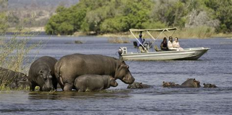 Moremi Game Reserve Botswana   Okavango Delta ...