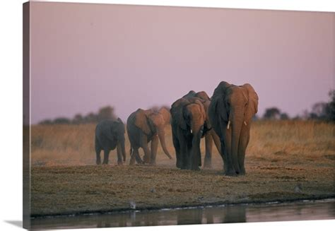 Moremi Game Reserve, Botswana Photo Canvas Print | Great ...