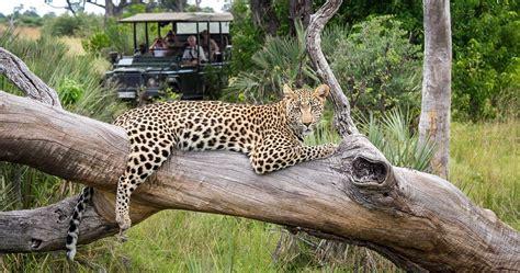 Moremi Game Reserve Botswana safari   Safari information ...