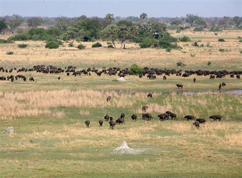 Moremi Game Reserve, Botswana | Safaris, Camps