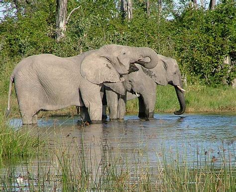 Moremi Game Reserve   Botswana Specialists